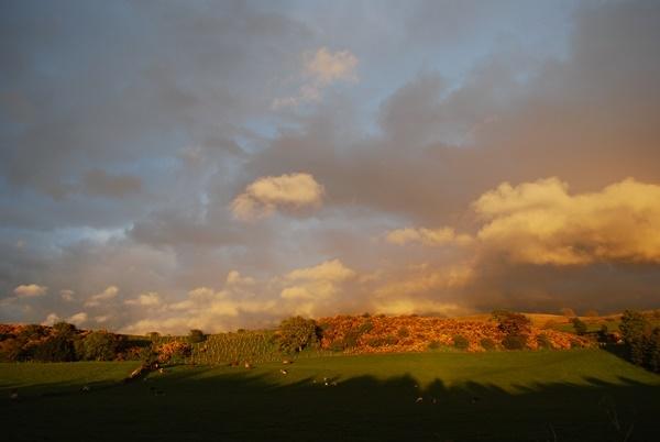 Calf Close Cottage fields
